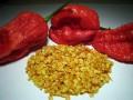 Premium Bhut Jolokia Seeds